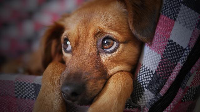 dog adoption near me