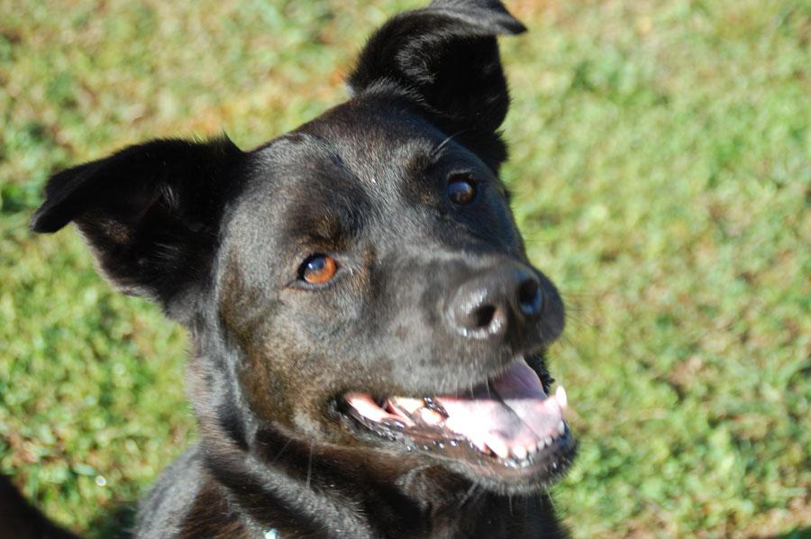 pet rescue organization